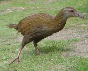 weka-wikimedia-commons-public-domain